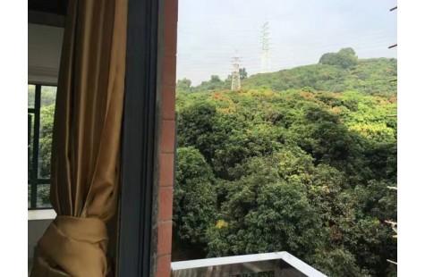 南山荔林山景